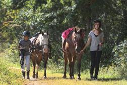 lebanon-hills-equestrian-trail.jpg