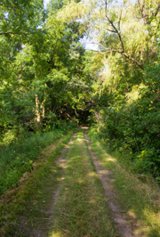 whitetail-woods-trailhead.jpg